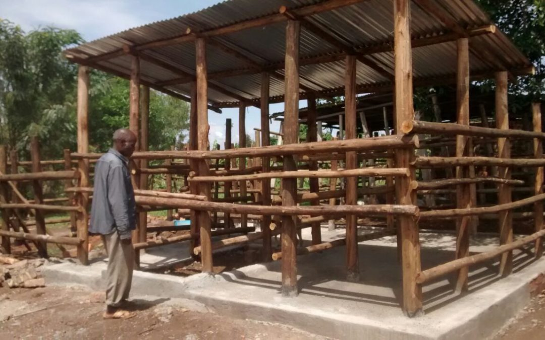 A Dairy Cow Project for Ssaza Elderly Group
