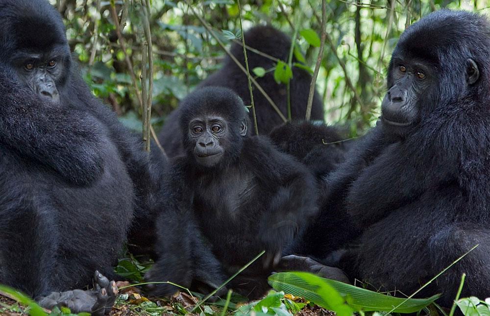 Extend your 7-Day Adventure: Gorillas & Safari Tours