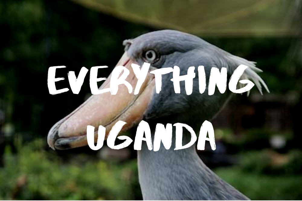 Everything Uganda: Birds of Masaka, Part 1
