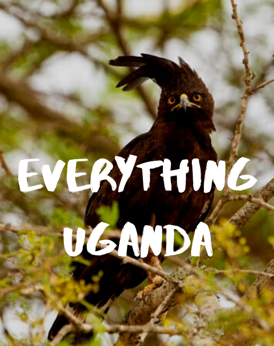 Everything Uganda: Birds of Masaka, Part 3