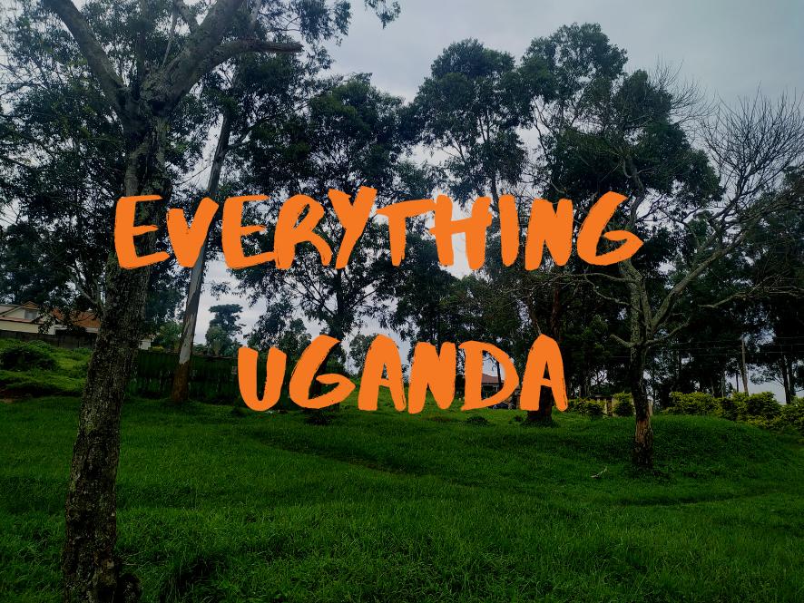 Everything Uganda: Trees of Masaka Part 3