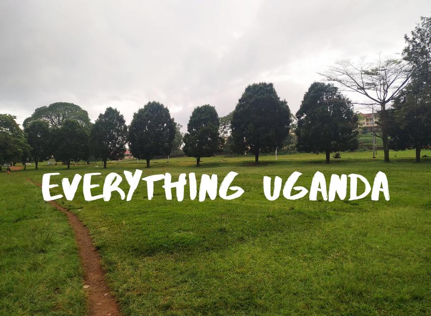 Everything Uganda: Trees of Masaka Part 1